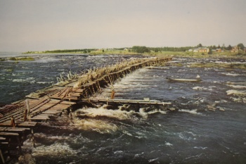 Hevospato oli pitkä ja vankkarakenteinen. Kuva Suomen kalakirjasto.