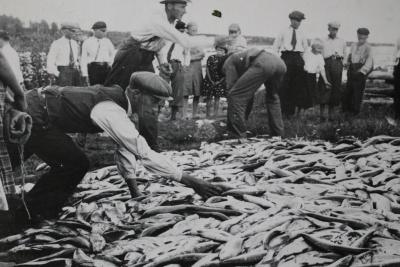 Jaolla paljon kaloja. Kuva Fiskemuseum, Haparanda Stad.