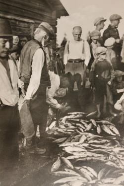 Siianjako 1900-luvun alussa. Kuva Suomen kalakirjasto.