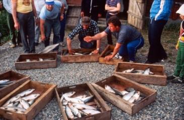 Siianjaolla vuonna 1984. Kuva Suomen kalakirjasto.